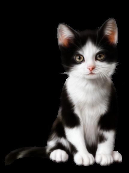 Cute kitten transparent clip art.