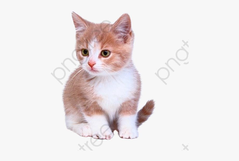 Cute Kitten Kittens Clipart.