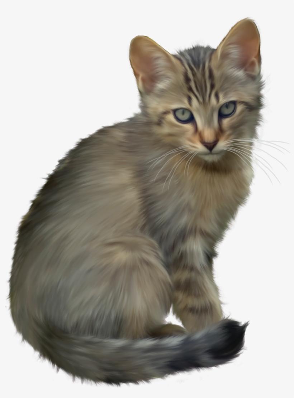 Cute Kitten Png Clipart.