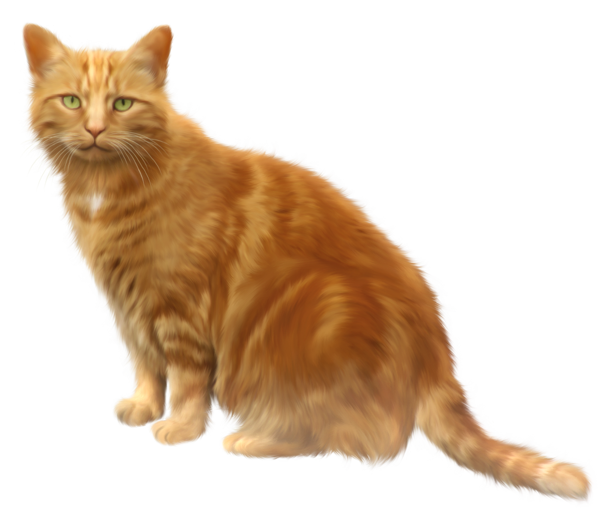 Orange Cat Transparent PNG Clipart.