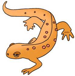 Similiar Red Spotted Newt Clip Art Keywords.