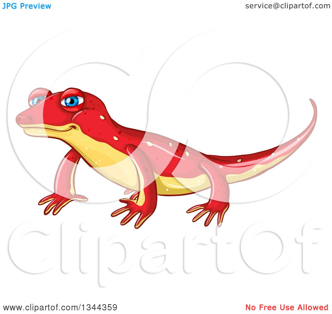 Clipart of a Cute Red and Yellow Newt.