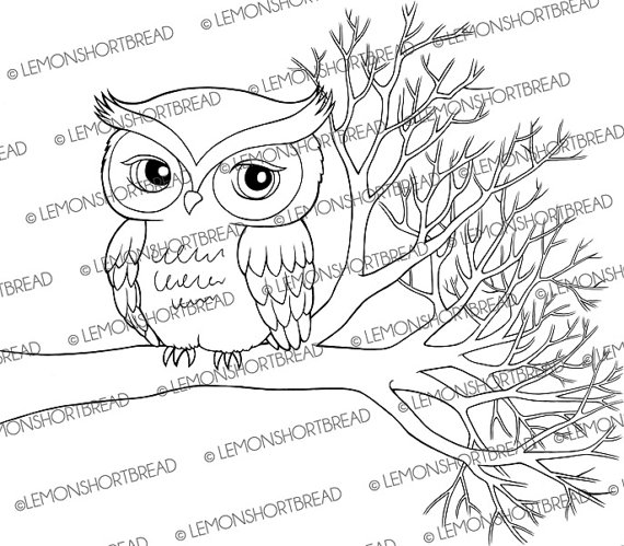 Cute owl clip art black and white