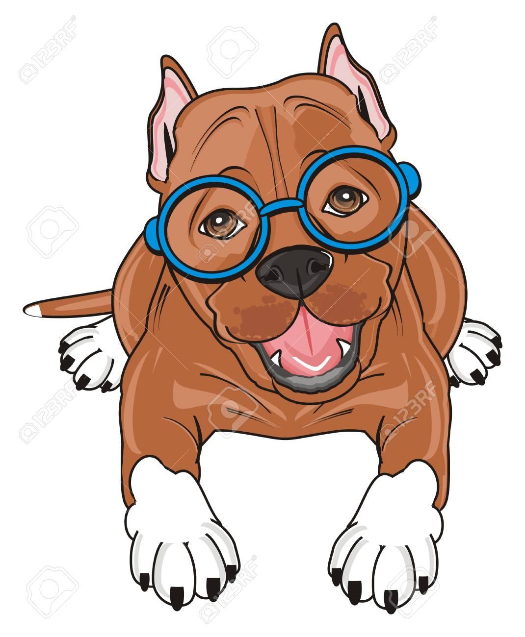 cute pitbull in the blue glasses lying.