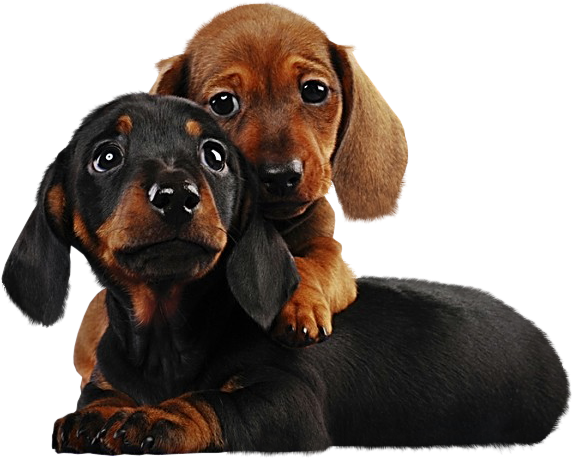 Free Clipart Puppies & Free Clip Art Images #17554.