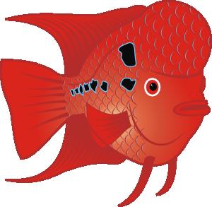 Flowerhorn Fish Clip Art at Clker.com.