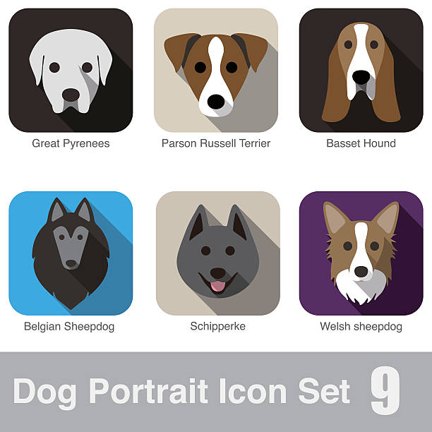 Belgian Sheepdog Puppies Clip Art, Vector Images & Illustrations.