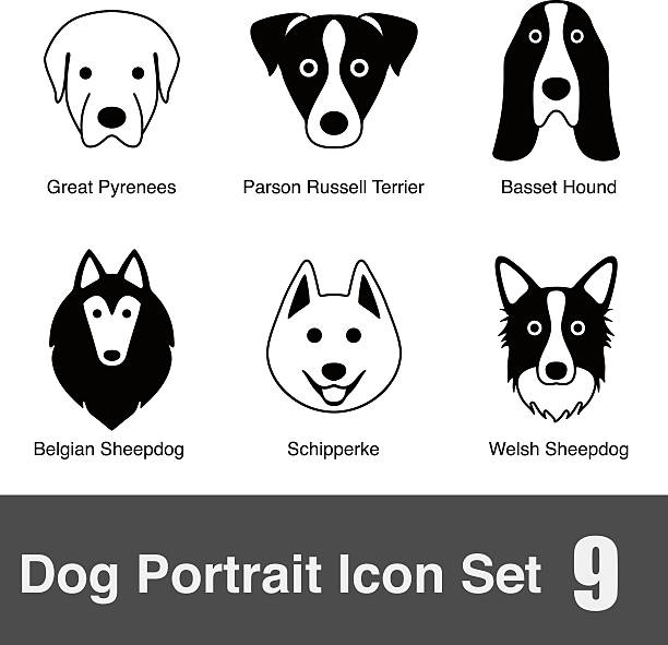 Basset Clip Art, Vector Images & Illustrations.