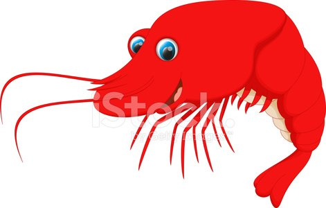 cute shrimp cartoon Clipart Image.