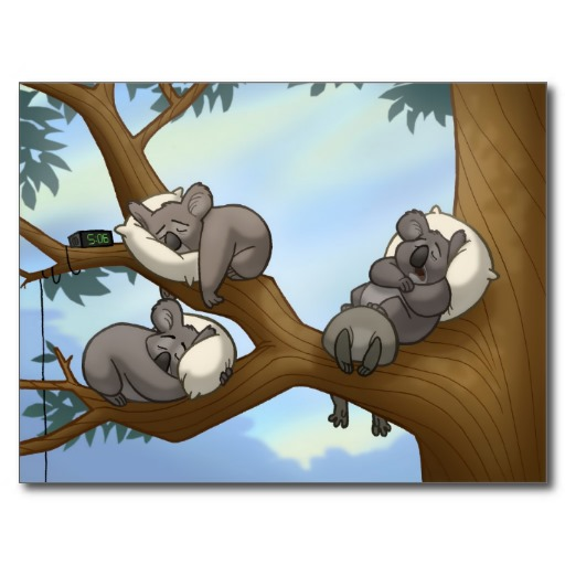 Sleeping Koala Postcard.