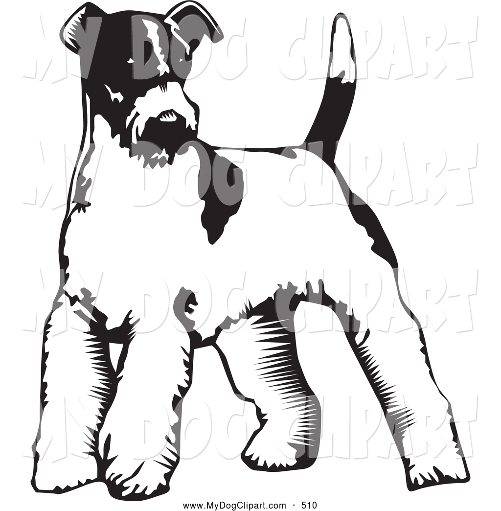 Clip Art of a Cute Wire Fox Terrier Dog Standing on a White.