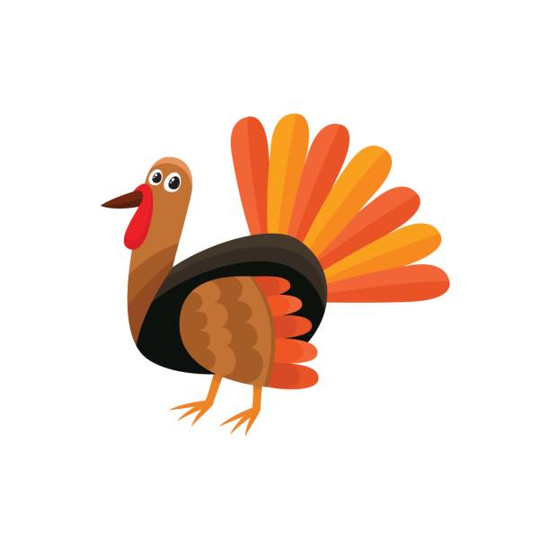 Best Turkey Illustrations, Royalty.