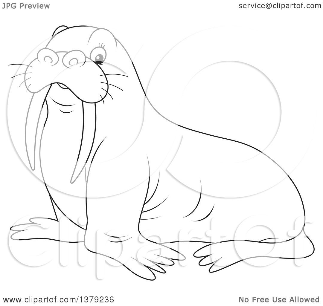 Clipart of a Cute Black and White Walrus.
