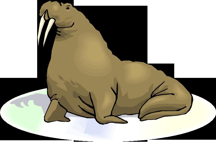 Walrus Clipart.