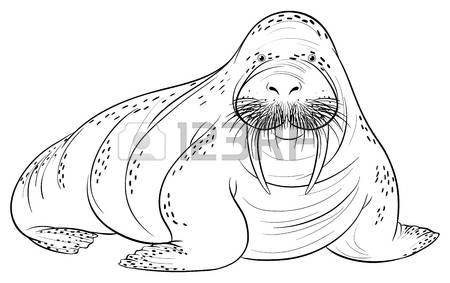 Walrus Clip Art Stock Photos Images. Royalty Free Walrus Clip Art.