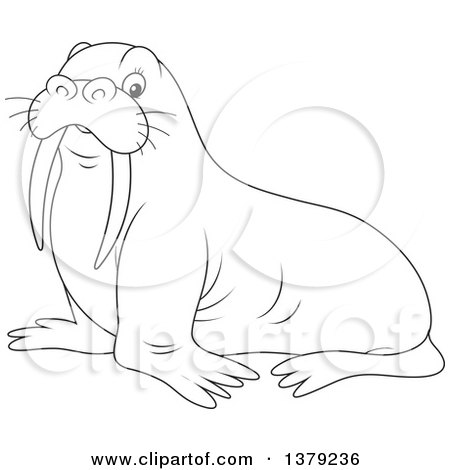Clipart Illustration of a Black And White Outline Of A Big Walrus.