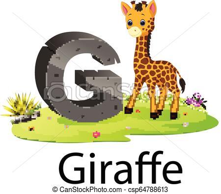 cute zoo animal alphabet G for giraffe with real animal.