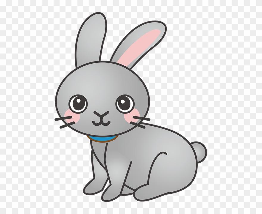 Rabbit, Bunny, Animal, Cute.