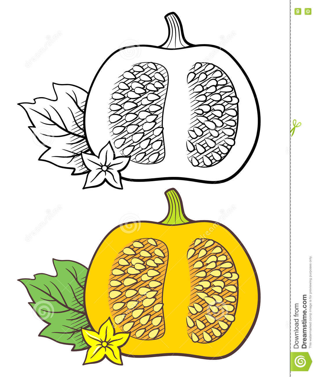 Pumpkin Illustration Stock Vector.