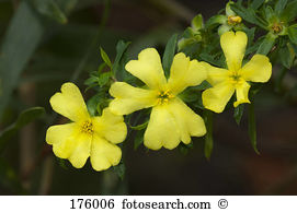 Bach flower essences Images and Stock Photos. 73 bach flower.