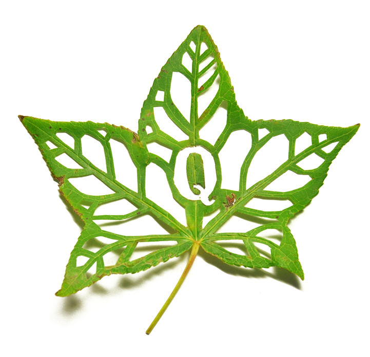 Leaf Graphic.