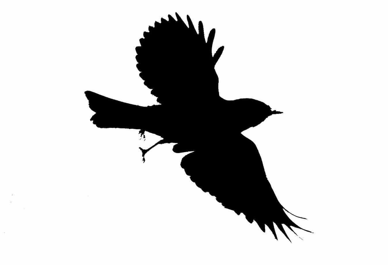 flying bird silhouette.
