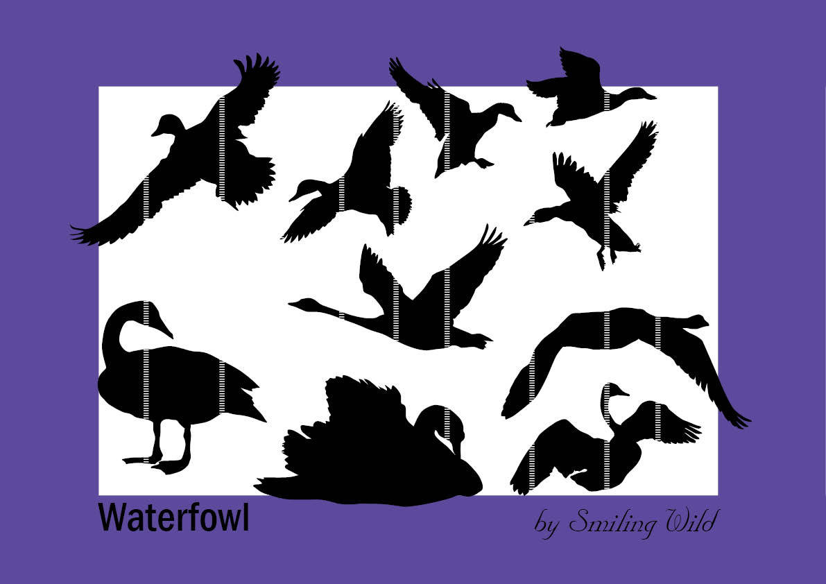 bird waterfowl swan printable duck svg clipart silhouette bird svg.