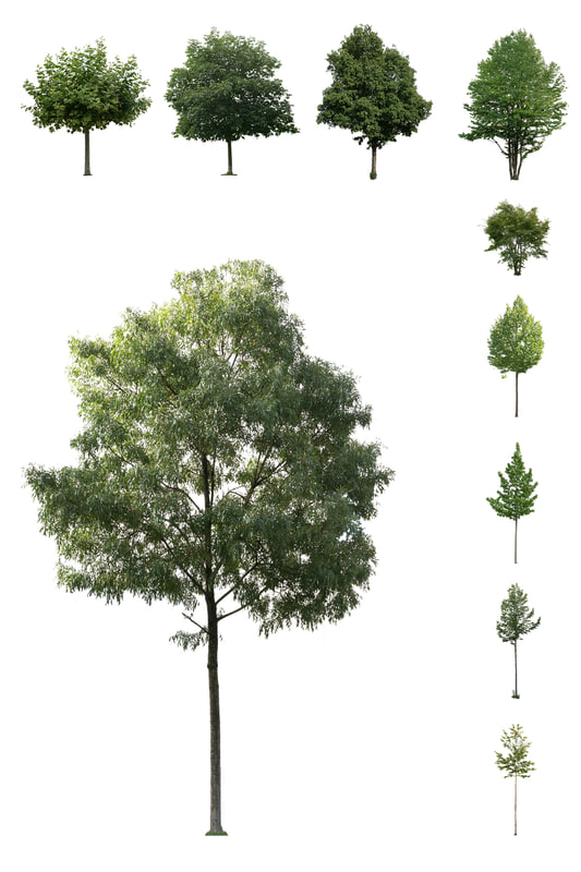 European Cutout Tree Package 01.