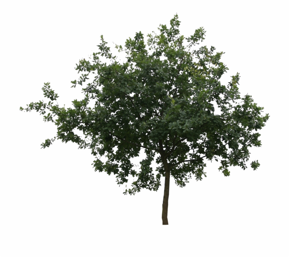 Cut Out Trees, Transparent Png Download For Free #2091729.