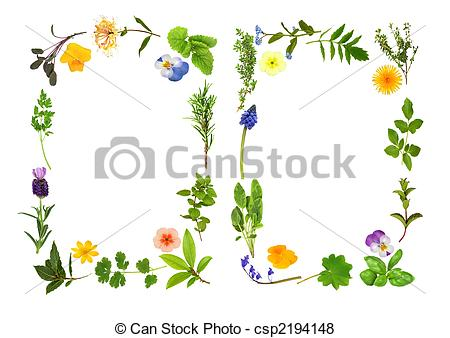 Herb Illustrations and Clip Art. 37,026 Herb royalty free.