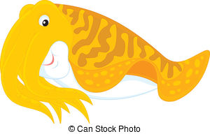 Cuttlefish Illustrations and Stock Art. 656 Cuttlefish.