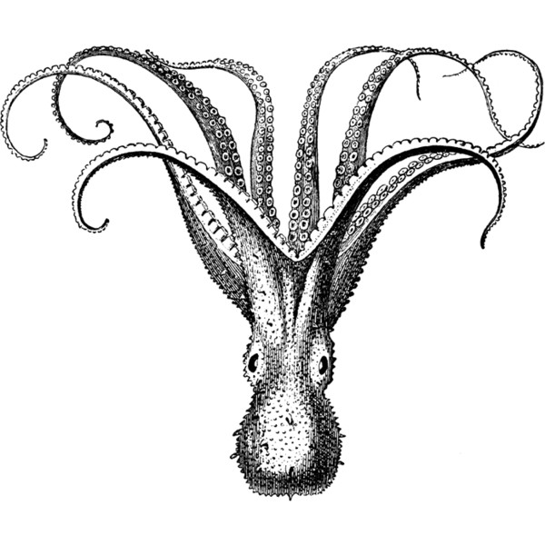 Cuttlefish Clipart.