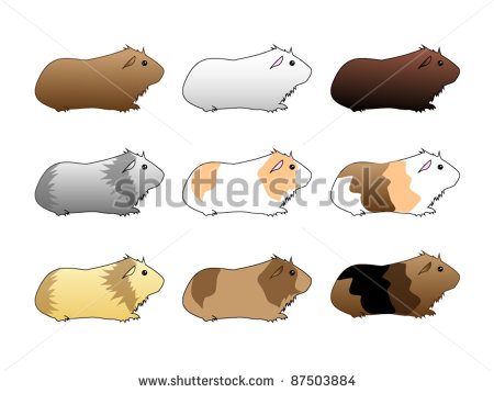Cuy clipart #16