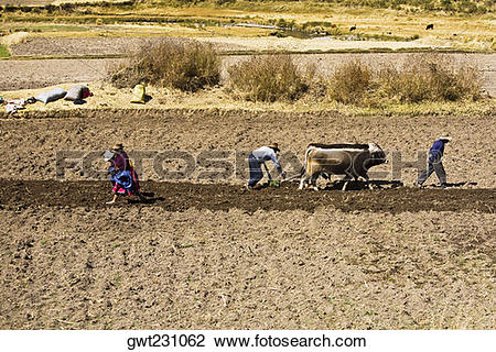Stock Photo of Side profile of a farmer ploughing a field with.