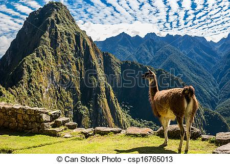 Stock Photography of Llama Machu Picchu ruins peruvian Andes Cuzco.
