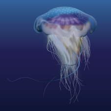 Jellyfish — Exotic Aquaculture.