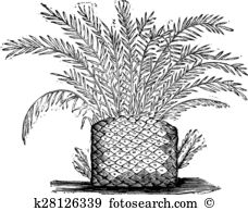 Cycad clipart #12