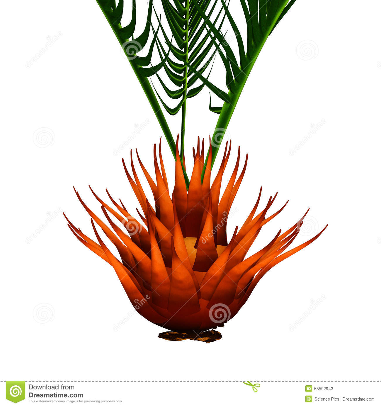 Cycad Stock Illustrations.