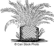 Cycads Vector Clip Art Royalty Free. 10 Cycads clipart vector EPS.