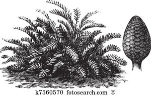 Cycad Clipart EPS Images. 34 cycad clip art vector illustrations.