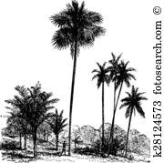 Cycads Clip Art Royalty Free. 10 cycads clipart vector EPS.