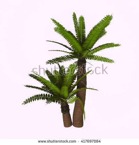 Cycad Stock Photos, Royalty.
