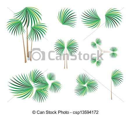 Vectors Illustration of Isometric of Lady Palm Tree on White.
