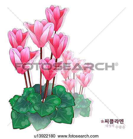 Cyclamen Illustrations and Stock Art. 48 cyclamen illustration.
