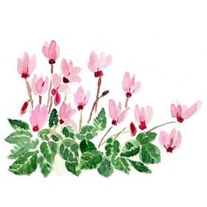 Plant Room Illustration