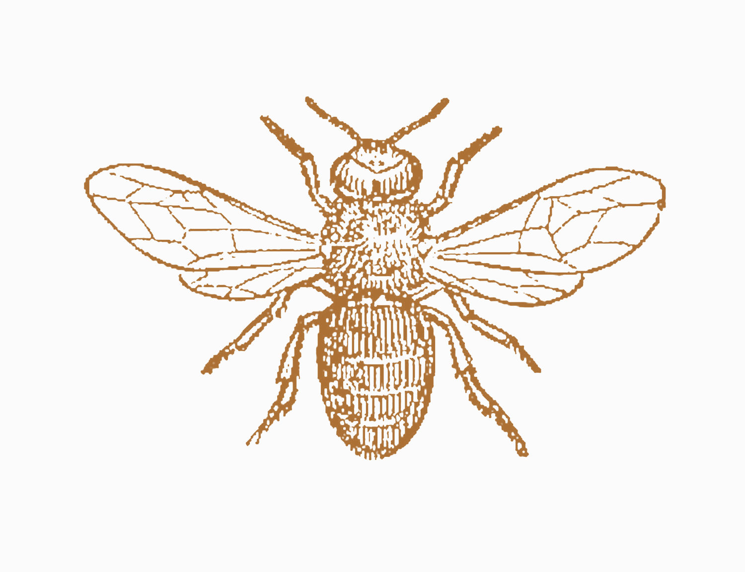 Honey bee queen life cyclo clipart black and white.