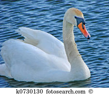 Cygnets clipart #19