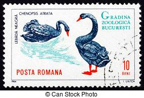 Stock Photographs of Black Swan.