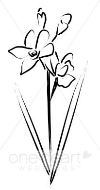 Brushstroke Cymbidium Orchids.