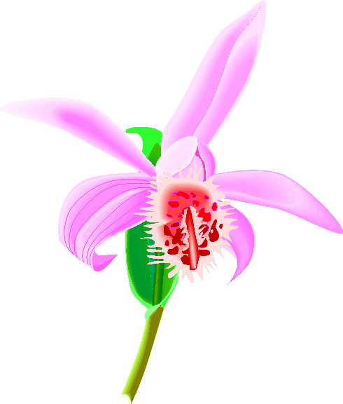 Green Orchid Clipart.